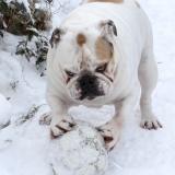 snowdawg-02
